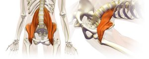 AWAKEN YOUR PSOAS I @ Body Basics Well-being | Eindhoven | Noord-Brabant | Nederland
